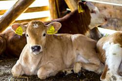 Rastlinná a živočíšna výroba