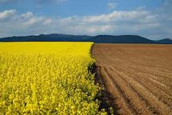 Výkup ornej pôdy